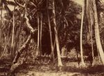 Bush Pleasant Island. From the album: Views in the Pacific Islands