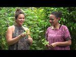 Les tiges de citrouille - Les feuilles comestibles du Pacifique